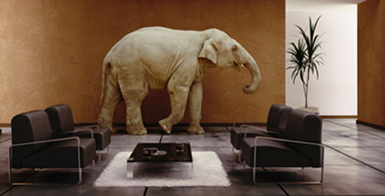2015-0225 Elephant in the Room