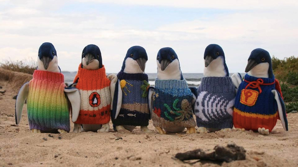 2015-1121 Penguins in Sweaters